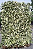 Mobilane Hedera Helix White Ripple 120x180 cm.